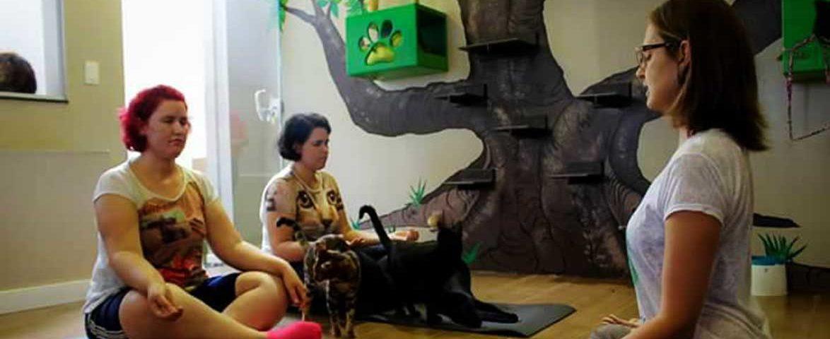ioga-com-gatos-sorocaba