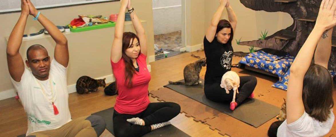 Em-Sorocaba,-praticantes-de-yoga-fazem-exercícios-na-companhia-de-gatos