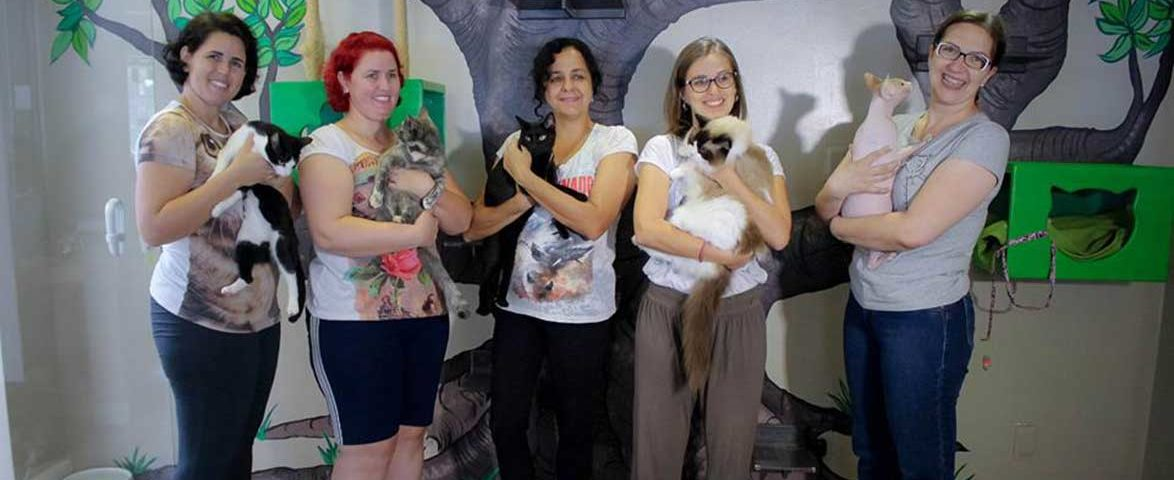 cafeteria-sorocaba-com-gatos