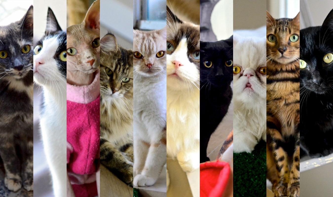 gatos-do-café-com-gato-sorocaba