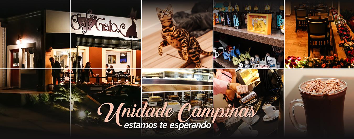 unidade-campinas-cafe-com-gato-guanabara-cafeteria