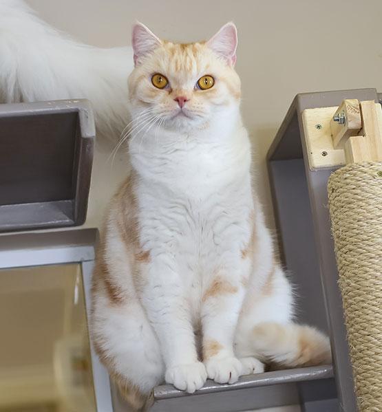 vanilla-cafe-com-gato-campinas
